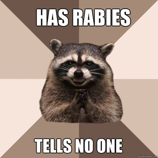 Evil Plotting Raccoon