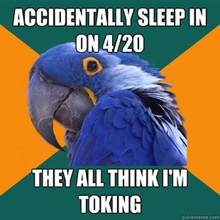 Related Pictures paranoid parrot best funny internet meme memes