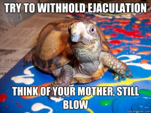 Sexually Awkward Turtle