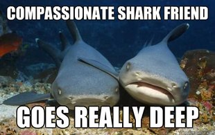 Compassionate Shark Friend