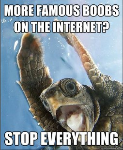 Stop Everything Turtle