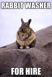 Wise Wondering Viscacha