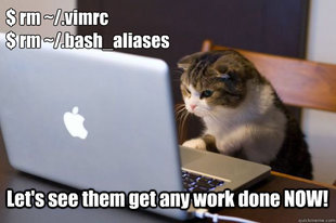 Web Developer Cat