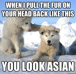 Make your own caring husky meme using our meme generator