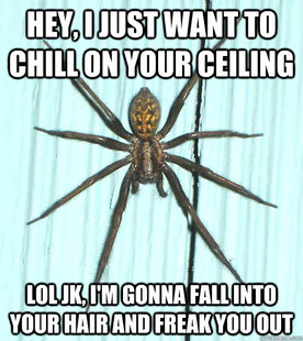 Giant scary spiders memes - photo#44