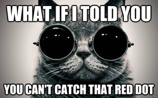 Morpheus Cat Facts