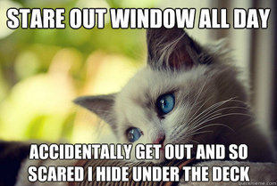 First World Cat Problems
