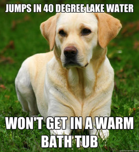 Dog Logic