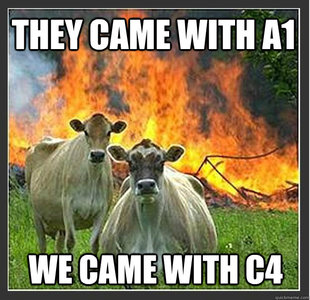 Evil cows