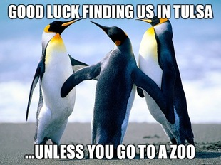 Awkward penguin group