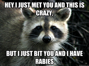 call me maybe raccoon