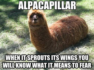 Alpacapillar