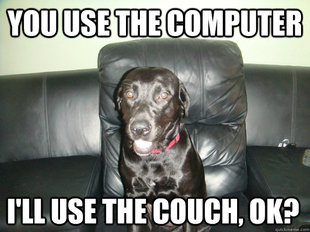 couch potato dog