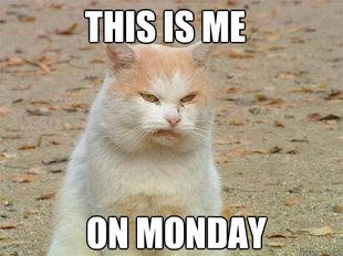 monday meme hate funny montag cat mondays memes happy fun morning humor helpful administration yang bilderx comments senin kayak banget