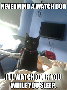 overly attached cat