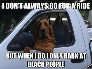 Racist Dog  Newest images  page 1  Meme Generator