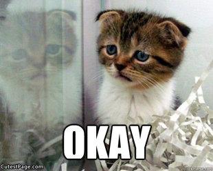 Sad cat memes | quickmeme