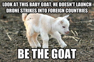 Innocent Goat