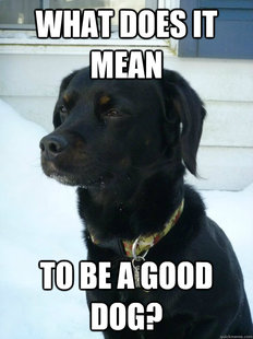 Philosophical Puppy
