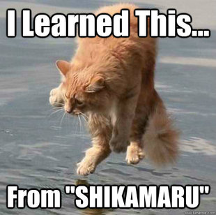 Cat Shinobi