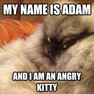 Angriest Cat