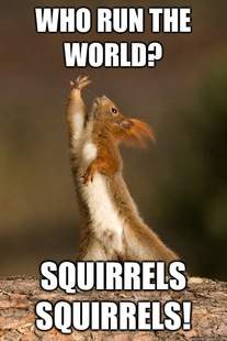 Who Run The World Squirrels