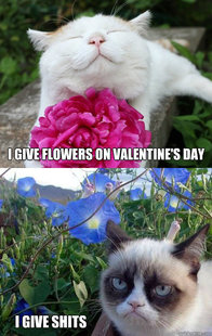 Grumpy Cat w happier cat and flowers