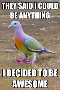 awesome pigeon