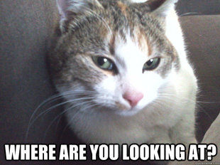 Angry Cat memes   quickmeme