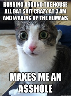 Sudden Clarity Cat