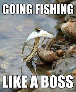 Fishing Snake meme quickmeme