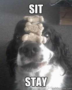 No Self-esteem Excellently Trained Cockerspaniel