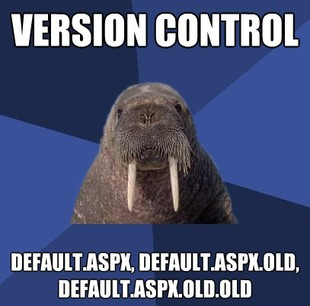 Web Developer Walrus