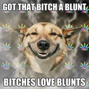 Stoner Dog